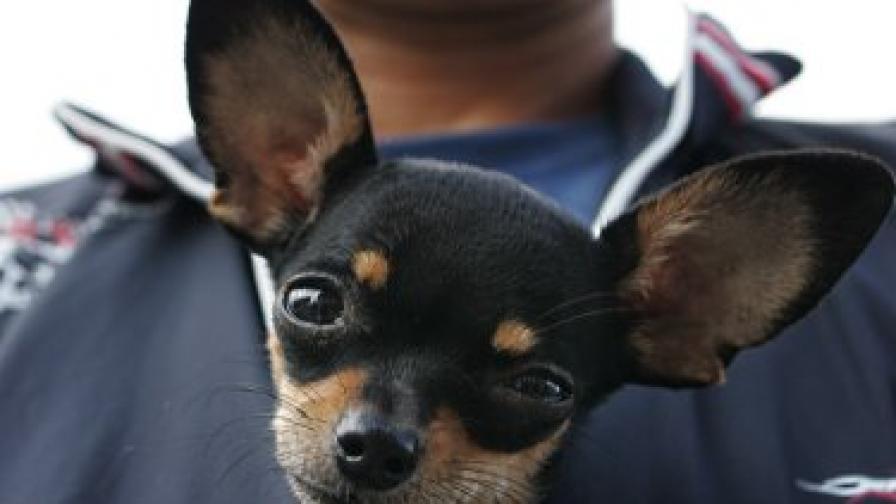 Ето друг възможен начин за пренасяне на куче - в пазва