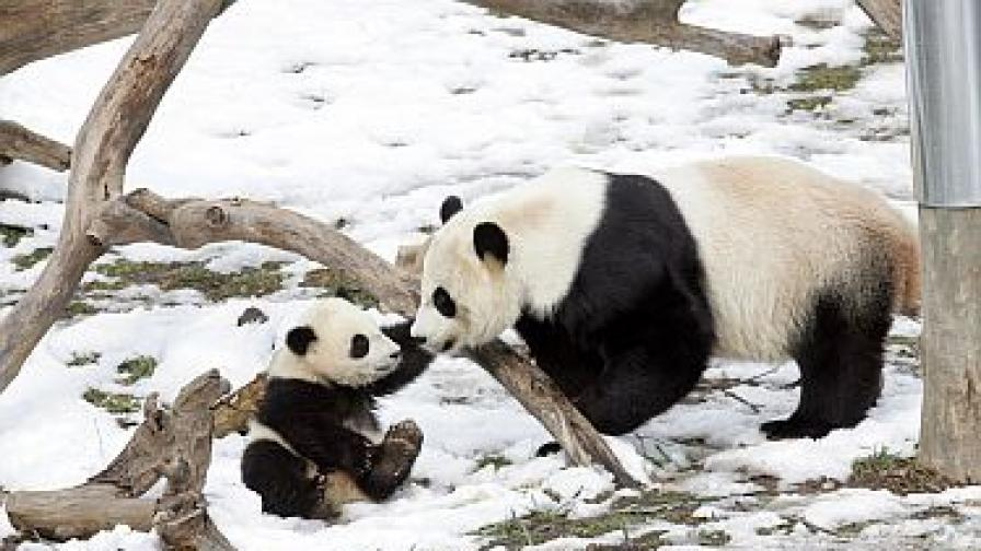 Пандата си отива