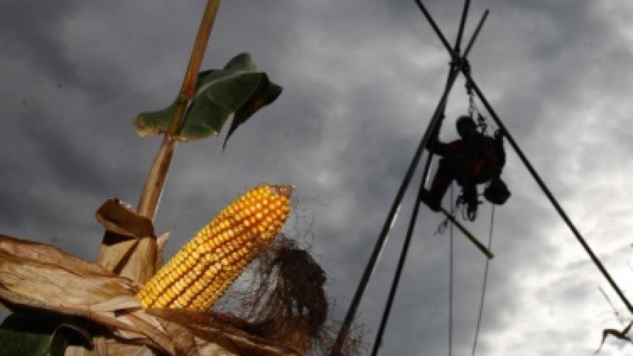 """Найденов пред """"Ройтерс"""": Няма да разрешим разпространението на ГМО"""
