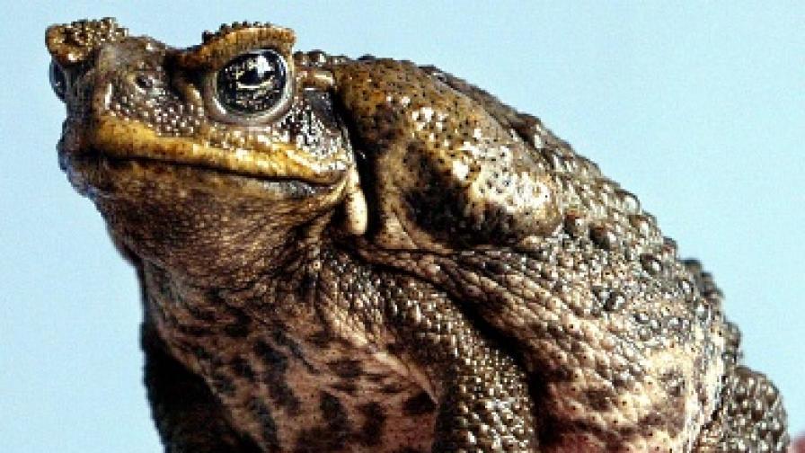 За жабите и котешката храна