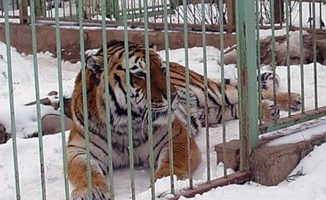 Зверовете на Дамбовеца вече в зоопарка
