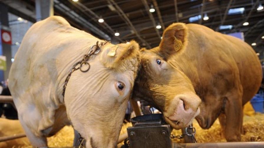 И кравите имат нужда от адвокат
