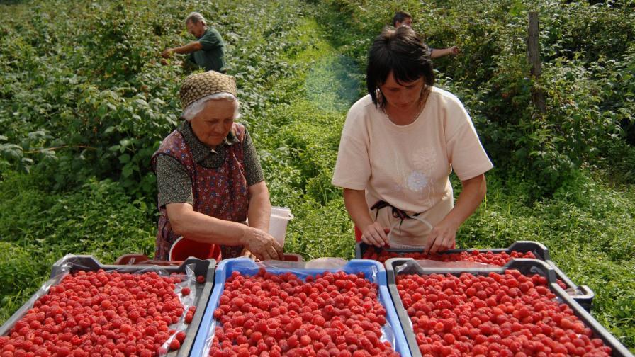 Малини или ягоди, моля?