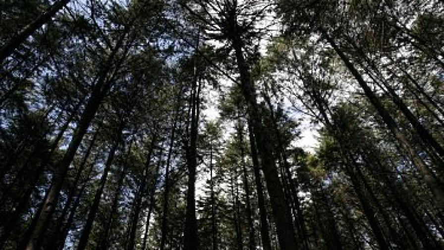 Ако се загубиш в гората, спри тока