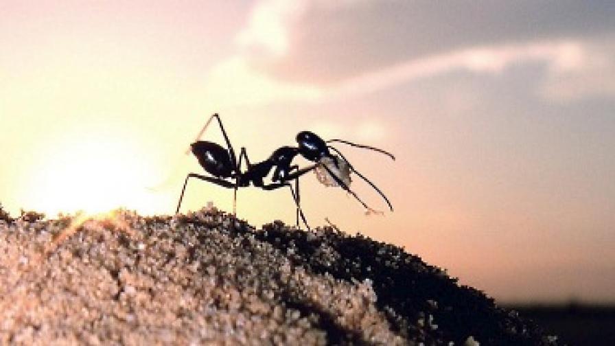 Мравките и щурците в периода на кризата