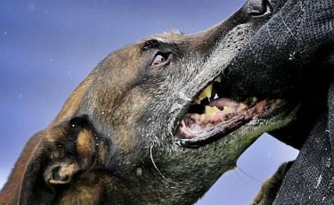 37-годишна нахапана жестоко от куче в София