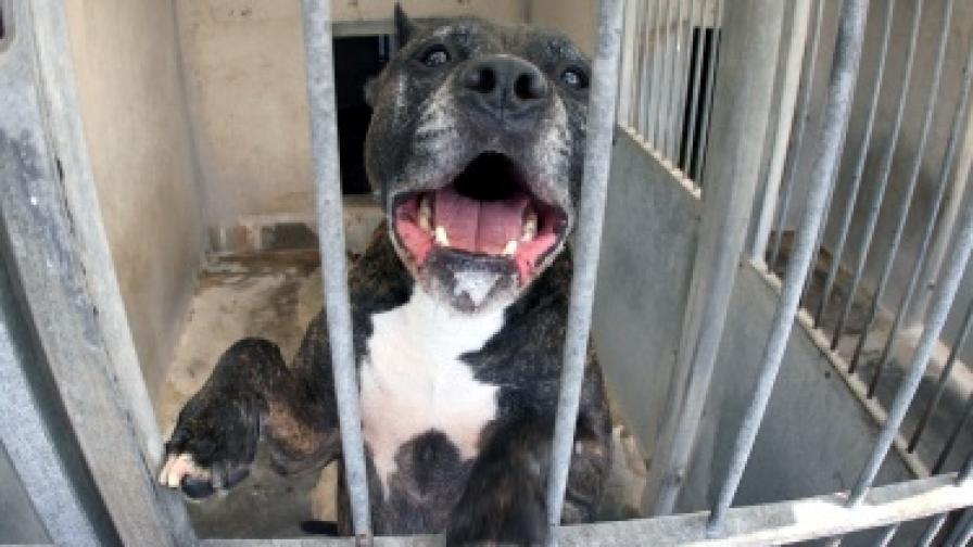 В Дания забраниха още 12 породи кучета