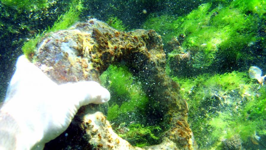 Откриха най-големия потънал край Созопол кораб