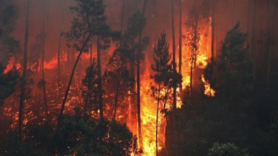 Осем изгорели и над 1200 евакуирани деца заради горските пожари в Русия