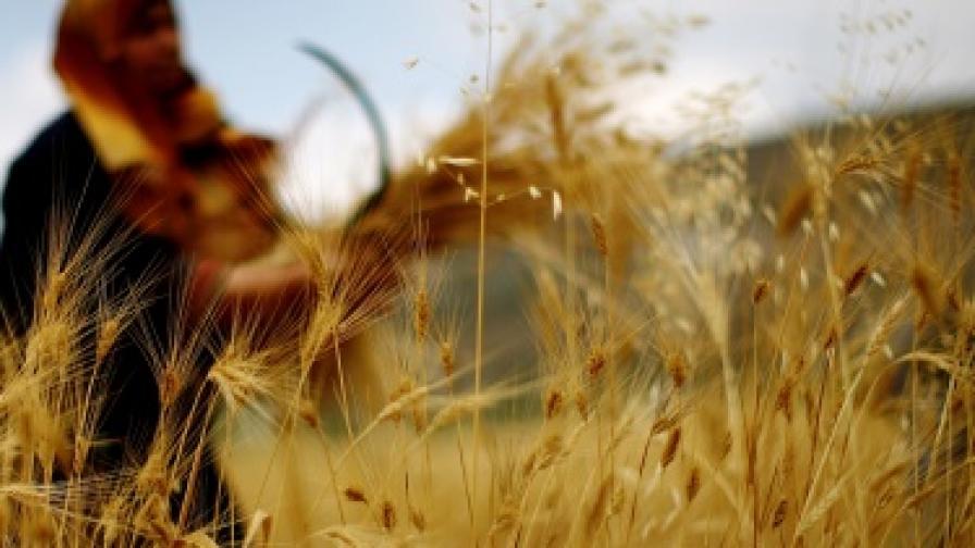 Чака ли ни нова продоволствена криза?