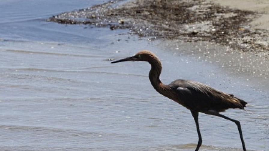 Еколози опазват колония чапли