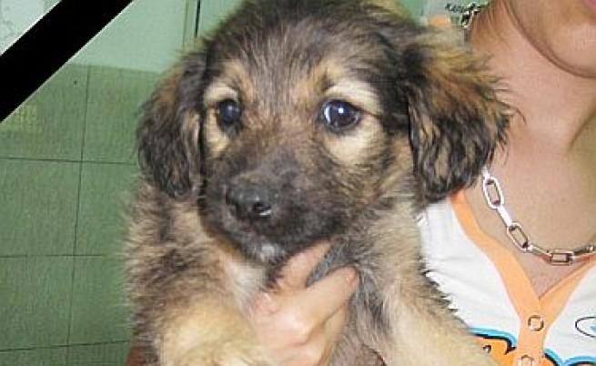 1000 лв. награда за разкриване убиеца на куче