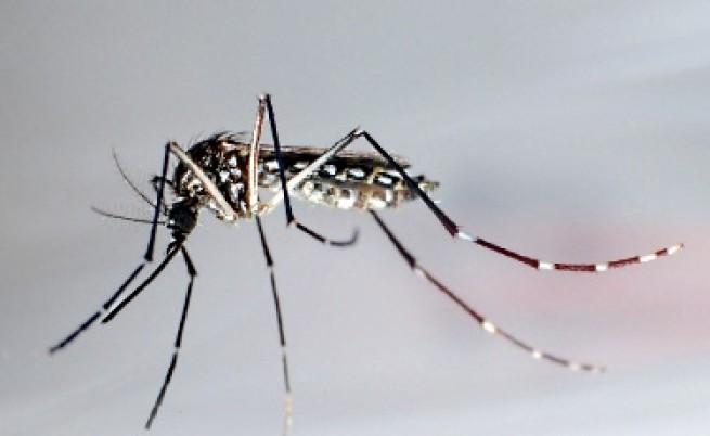 Учени изтребват комари със секс