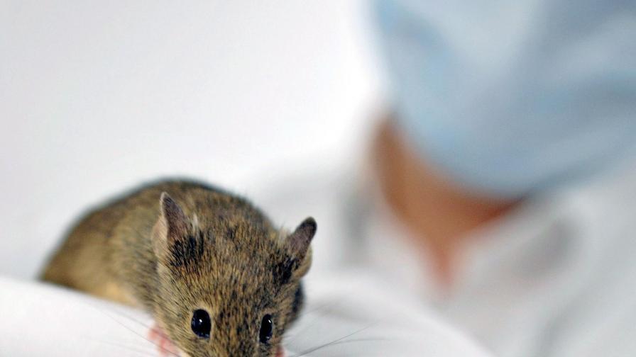 Глобяват университет за опити с животни
