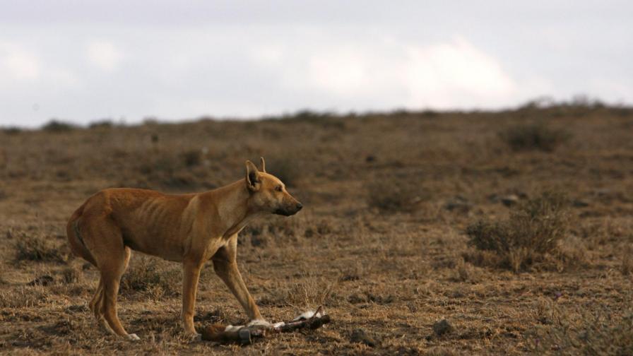 Откриха куче, изядено в САЩ преди 10 хил. години
