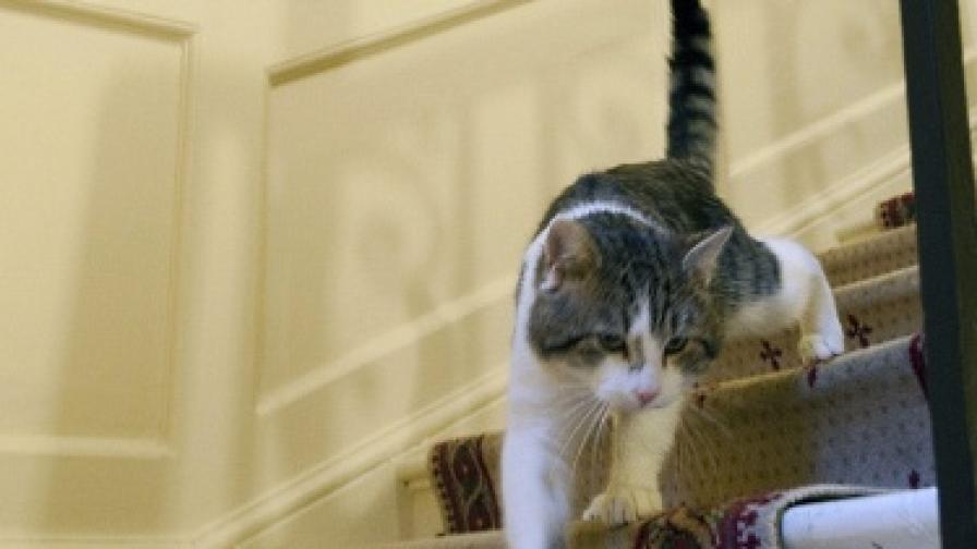 Котка с пет уши стана сензация в Русия
