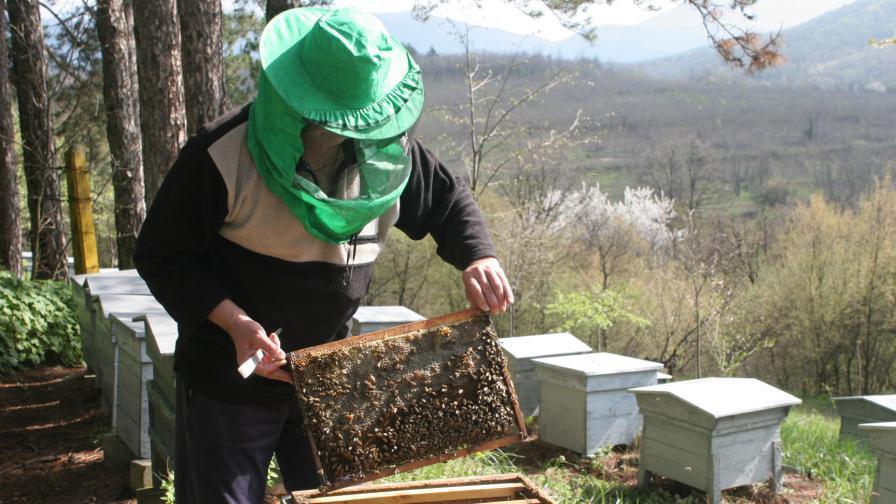 Паднало ли е качеството на българския мед?
