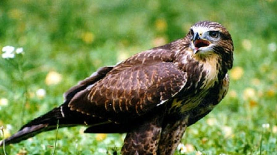 Редки птици намерени в тежко състояние