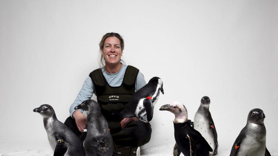 Нова беда: Пингвините оплешивяват