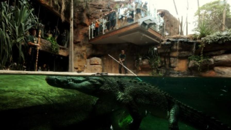 Крокодили едва не провалиха избори в ЮАР
