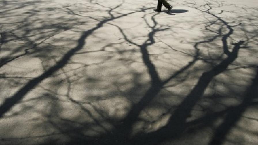 Познаваме ли дърветата в София?