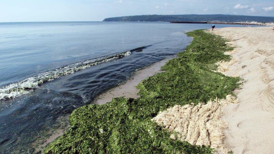 Българските плажове - изцяло в нормите на ЕС