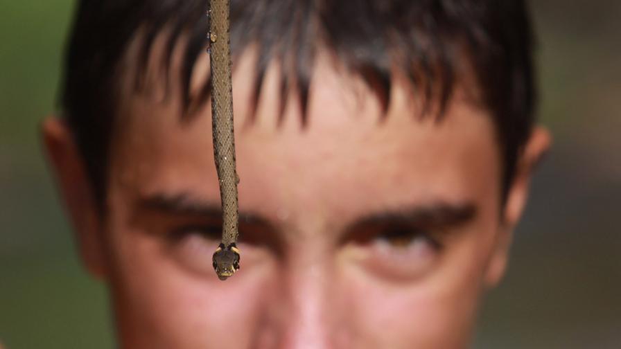 Полезни съвети за ухапани в сезона на змиите