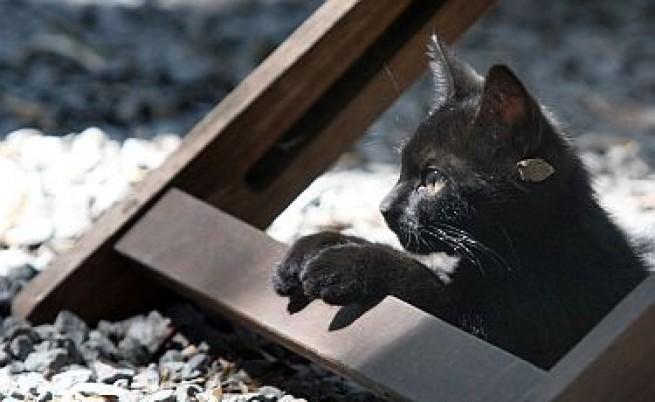 Арестуваха перничанин за убийство на котка