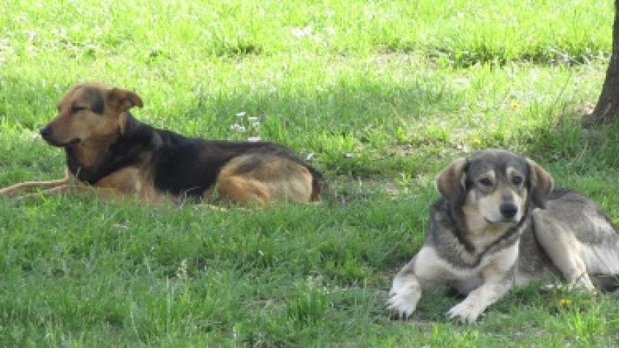 До 2016 г. - 95% по-малко безстопанствени кучета