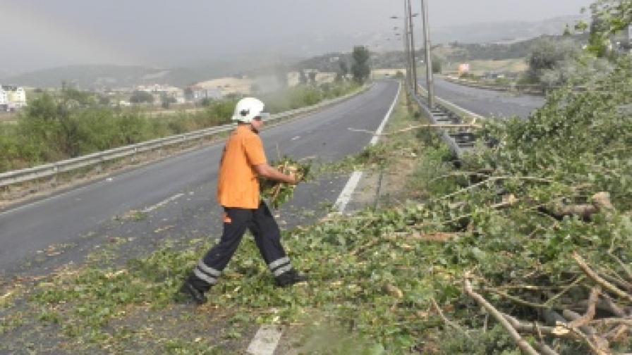 Топола падна на път Е-79 при разразилата се вчера буря край Благоевград