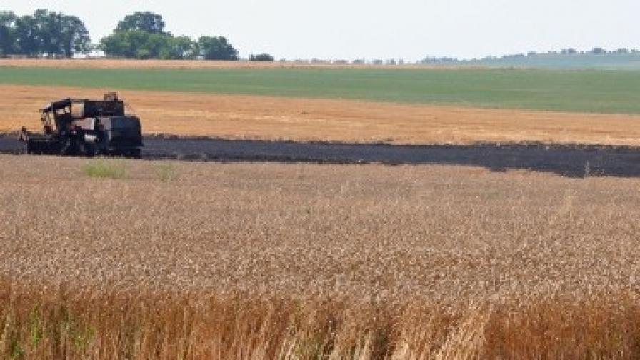 Качествена пшеница ожънаха в Добруджа