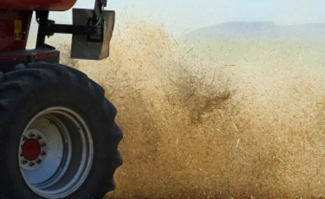 30% повече качествената пшеница спрямо 2010 г.