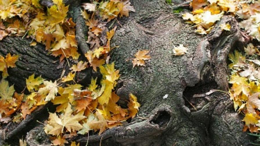 Есенна депресия - причини и решения