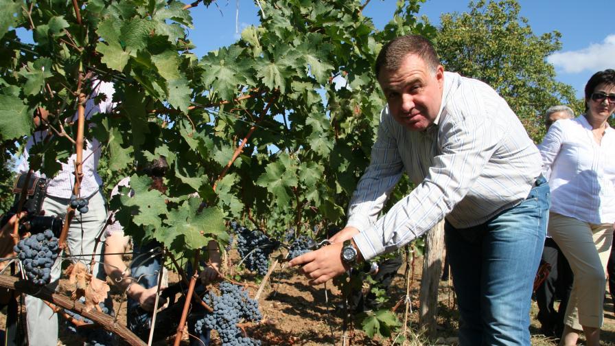 Найденов: Много качествено грозде тази година