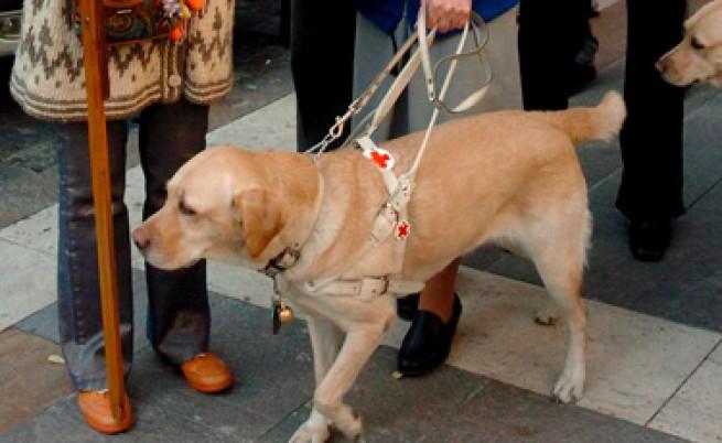 Незрящи с кучета-водачи недопускани на обществени места