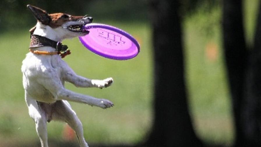Кучешки лай над 10 минути = 1000 долара