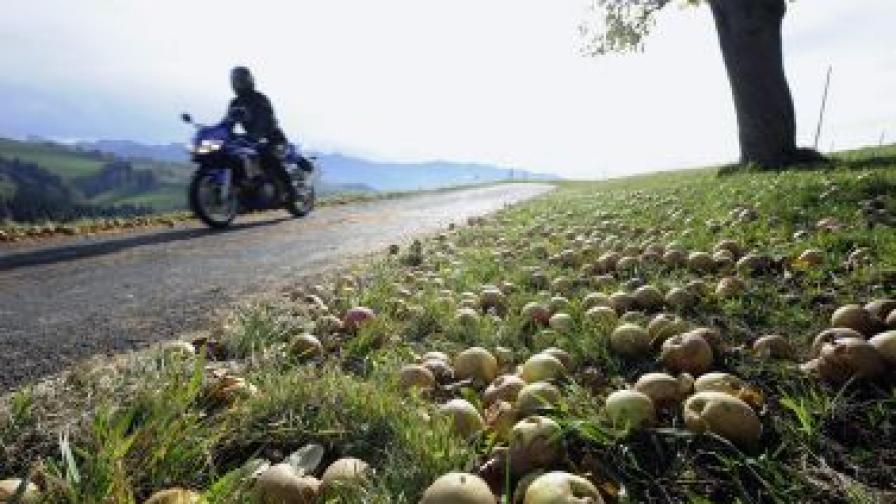 Дъжд от ябълки спря трафика в Ковънтри