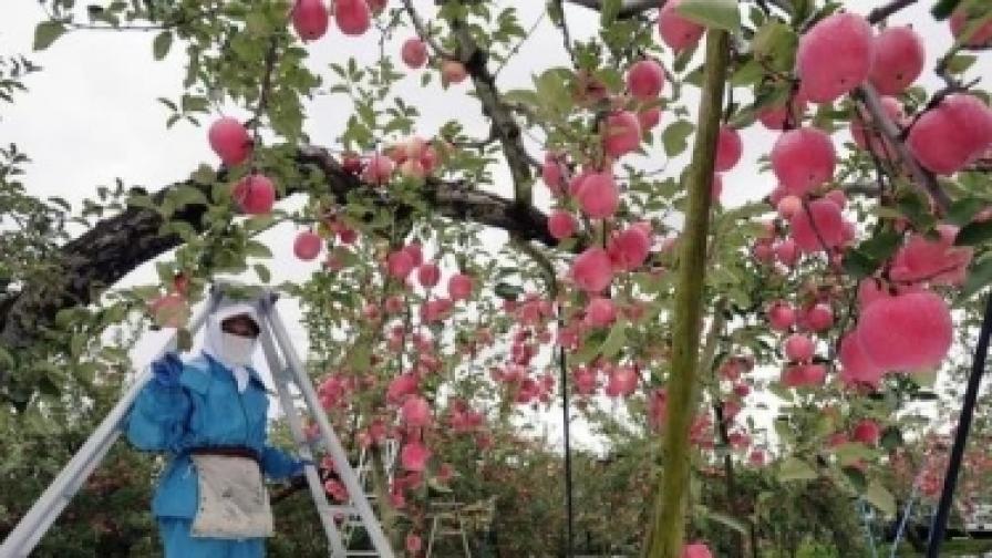 И Белгия ограничва българските и румънските работници