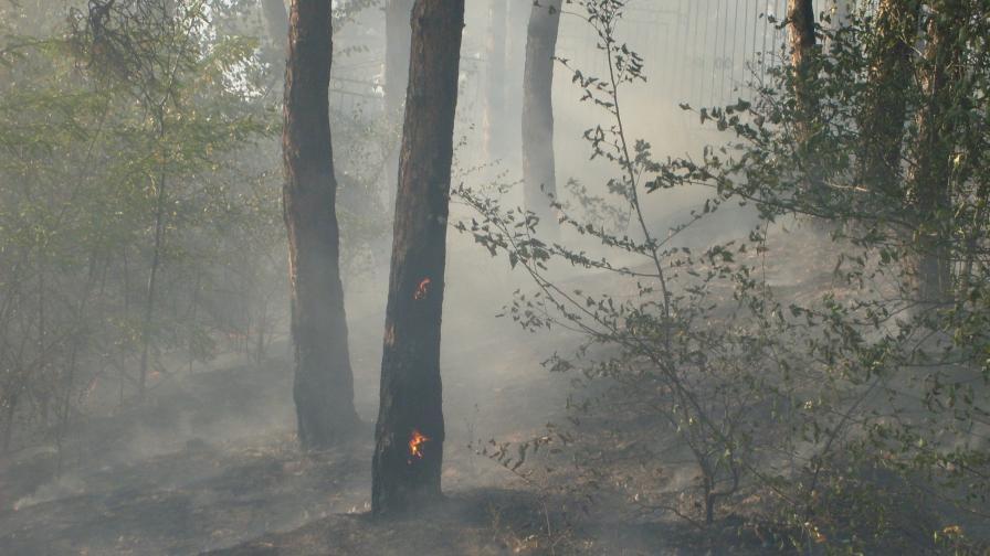 Доклад: В България горите се увеличават стабилно