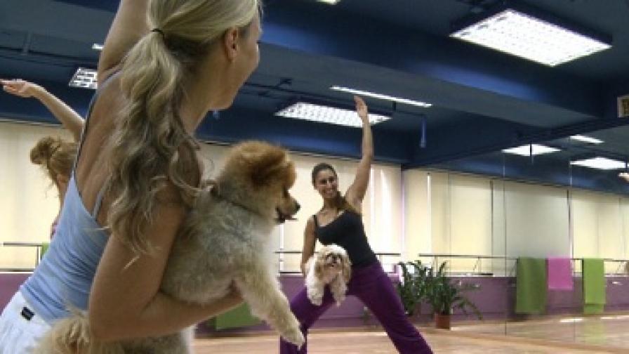 Кучета ходят на йога в Хонконг