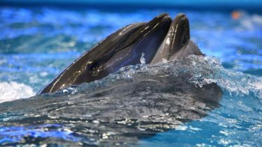 264 от най-умните делфини намерени мъртви