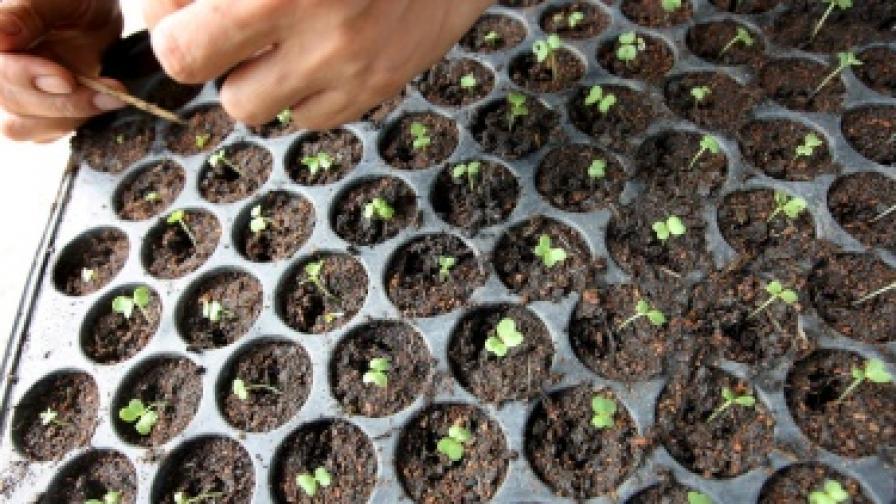 В детските градини ще гледат биозеленчуци