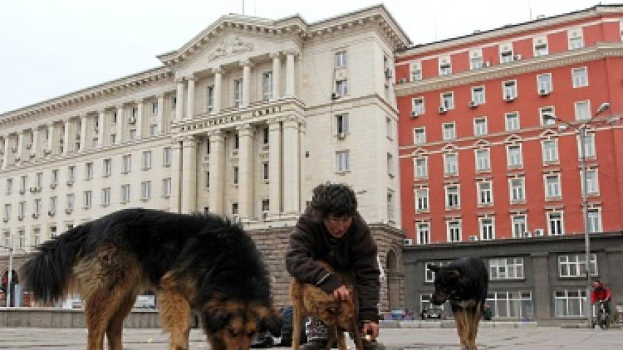 СОС прие програмата за овладяване на популацията от бездомни кучета