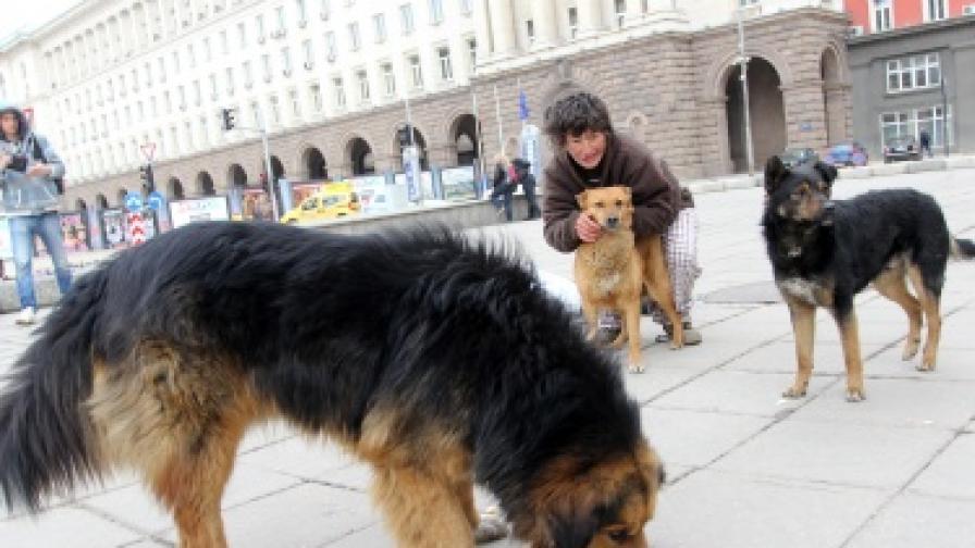 В последните дни се е увеличил броят на кучетата в центъра на София