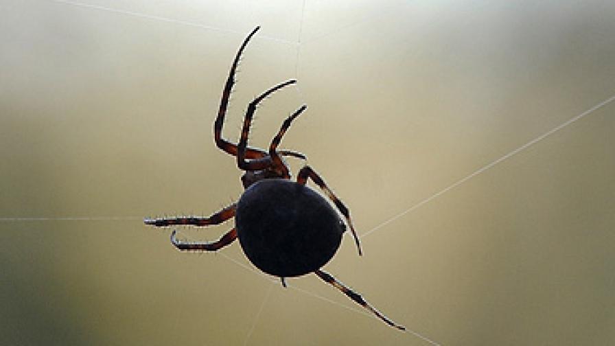 Страхът от паяци се лекува... за три часа