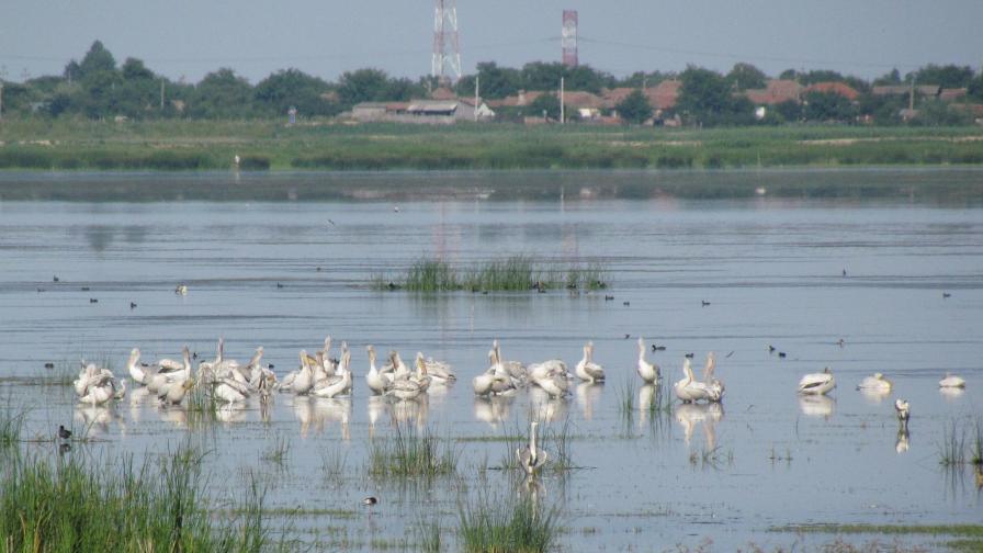 Намаляват повечето видове птици, които гнездят по река Дунав