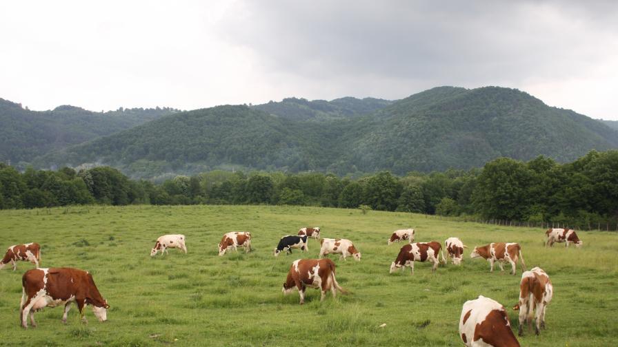 Ръст в биопроизводството у нас, вече има и ферма с 200 бизона