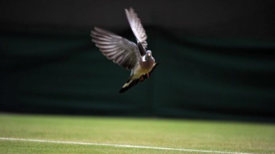 Дронът може да разпознава и истински гълъби