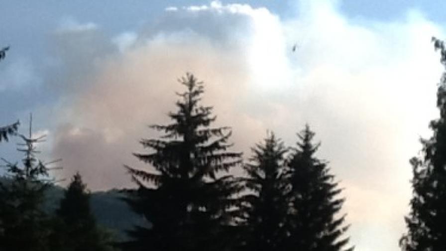 Еколог: Пожарът оставя гората мъртва за дълго време