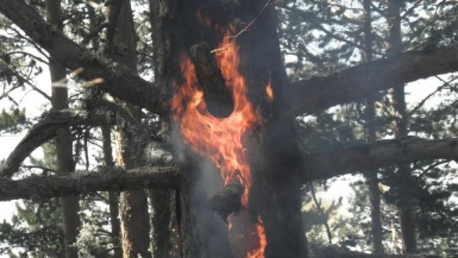 Пожарът край Елхово е локализиран